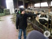 Liebe Kühe
